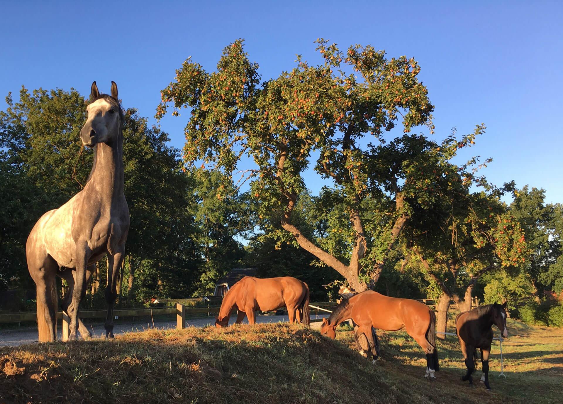 entspannender Urlaub mit Pferden im Reiterhotel in der Lüneburger Heide