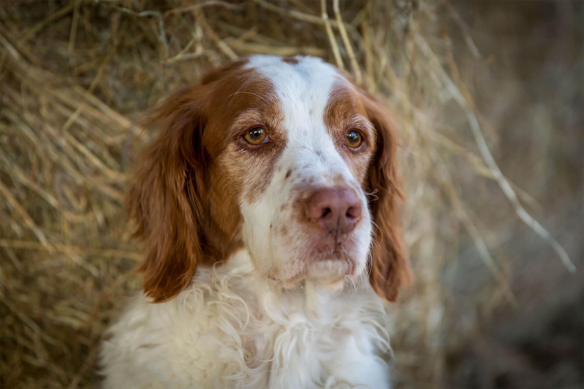 Hunde heißen wir auf dem Heinshof ebenfalls herzlichst Willkommen