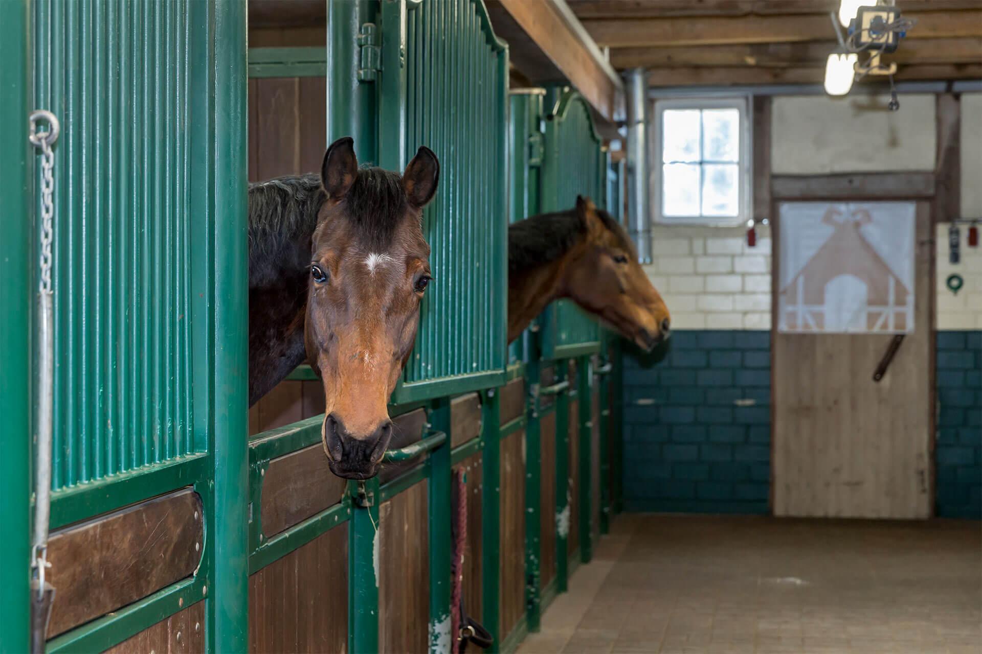 große, helle Gastboxen mit Gummiböden sorgen für Urlaubsfeeling bei ihrem Pferd