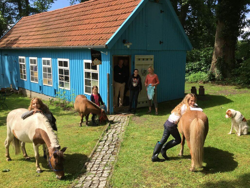 Mini-Shetties grasen vor dem Hofladen des Reiterhofs