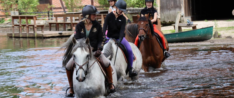Sport horse dm in water near Heinshof
