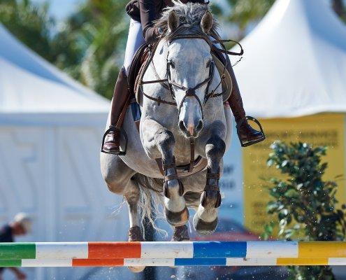Horse for sale - show jumping - name dm de treho